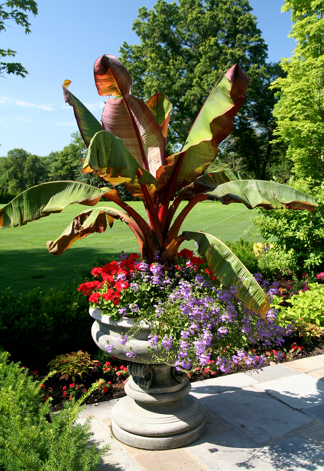 Tropical entry planter.