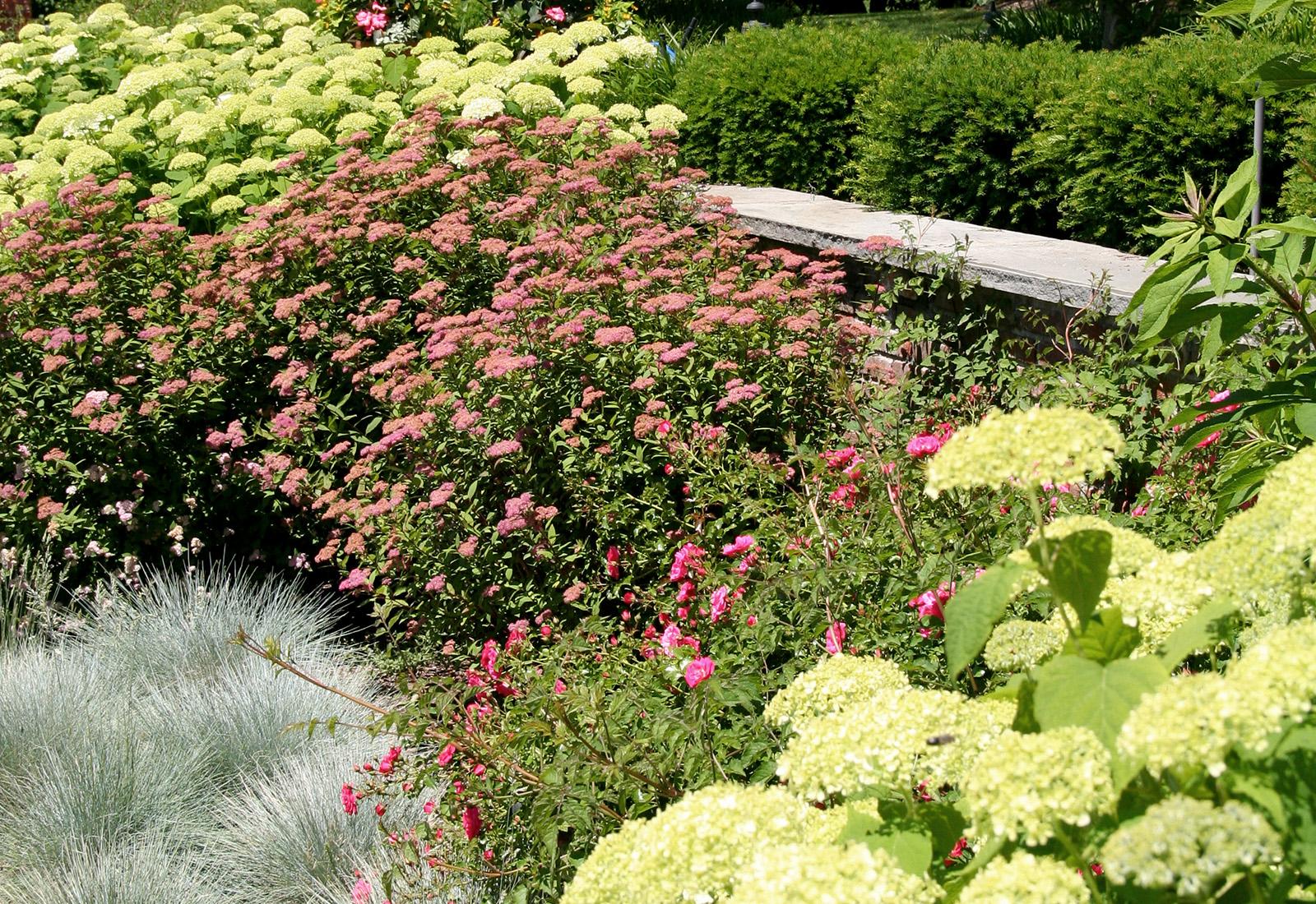 Perennial planting garden.