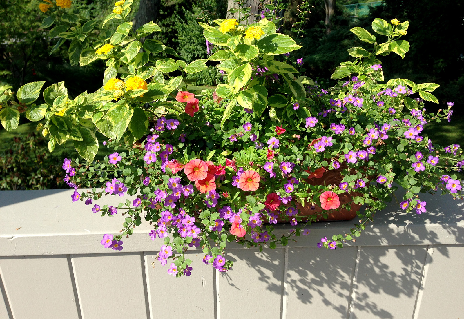 Mixed color planters on a ledge.