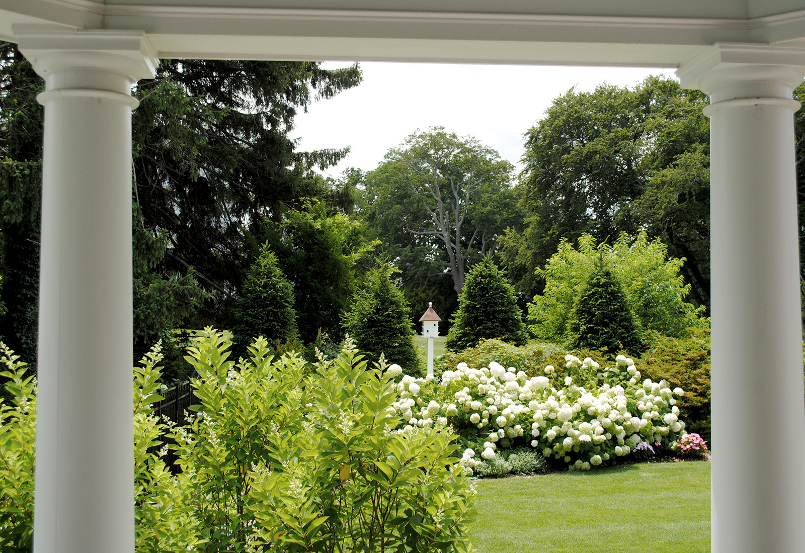 Elegant garden planting.