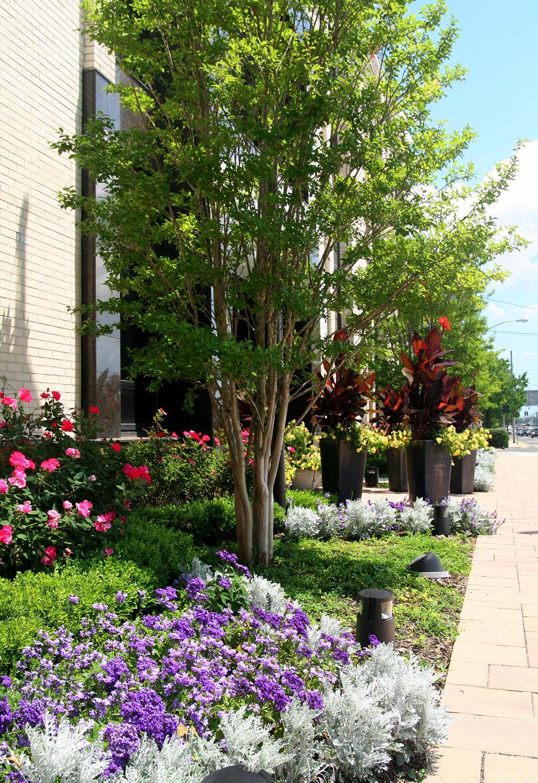 Summer planting in a commercial location.
