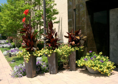 Modern mixed planters for summer color in a commercial setting.