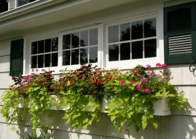 Window boxes with annual plantings.